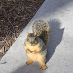 Spotted first squirrel in the States!