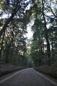 Meiji Jingu park & shrine