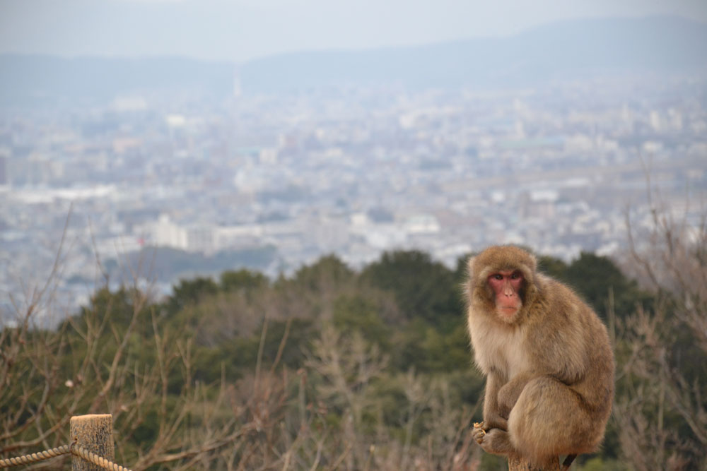 Travel back to Ancient Japan - Kyoto - Asian backpacker