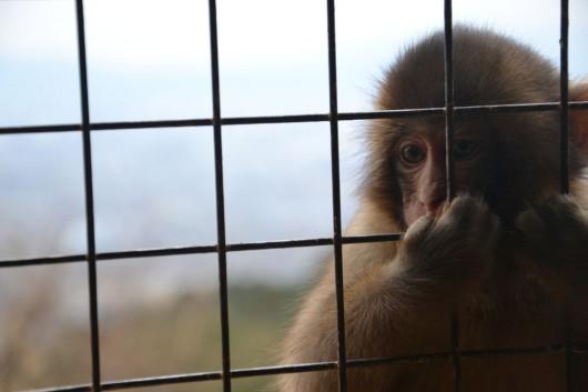 Fun with monkeys at the Iwatayama monkey park
