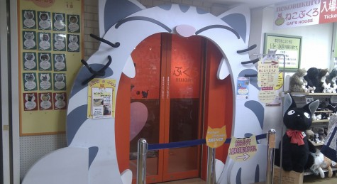 Entrance of the cat cafe in Ikebukuro