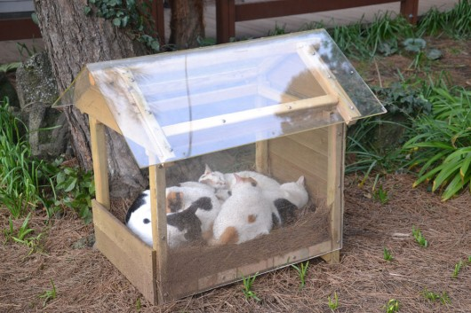 I've heard of dog house but a cat house?