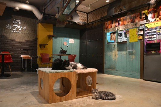 Interior of cat cafe