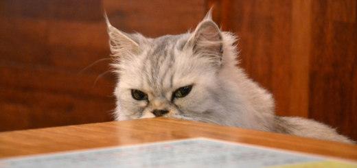 Evil cat is evil... plotting plans to take over mankind!