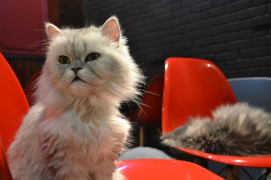 Tons of cat-fun in the cat cafe