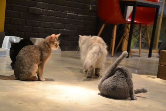 No room for privacy in cat cafe