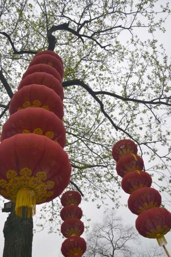 Lanterns in the Plum trees