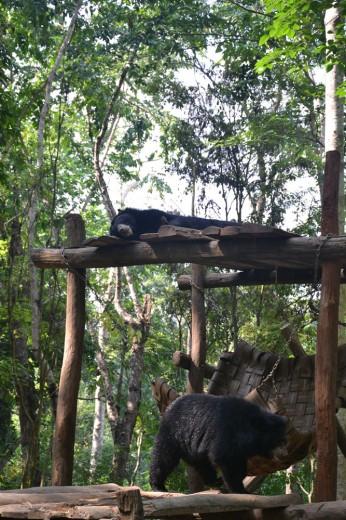 Bears, chillin' in Tat Kuang Si