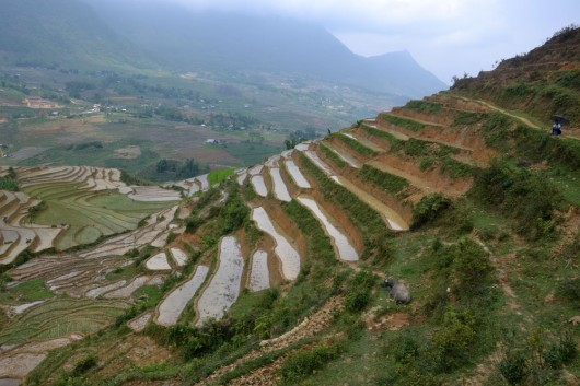 Amazing staircases of rice paddies