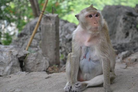 Monkeys, monkeys, monkeys everywhere! Oh how I love monkeys!