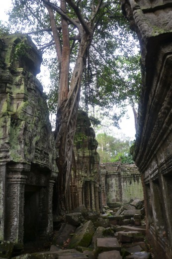 Mindblowing scenes of nature over man in Angkor Wat