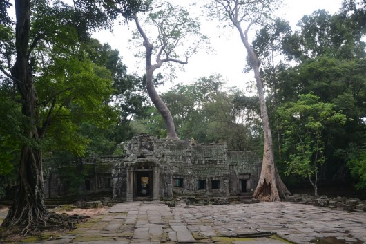 Amazing temples hidden in between ancient old trees