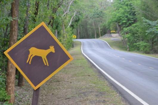 Careful! Little cute animals passing!