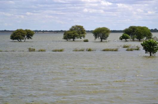 Submerged trees near the teak bridge in Amarapura