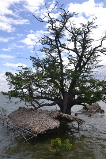 Submerged house and tree in Amarapura