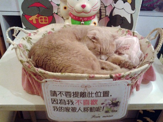 Cat in a basket!