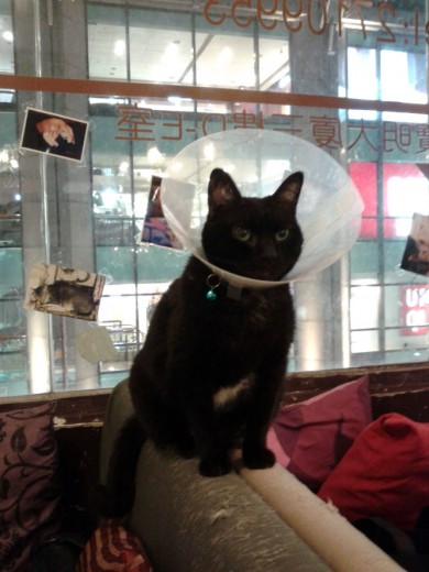 Cat with the cone of shame