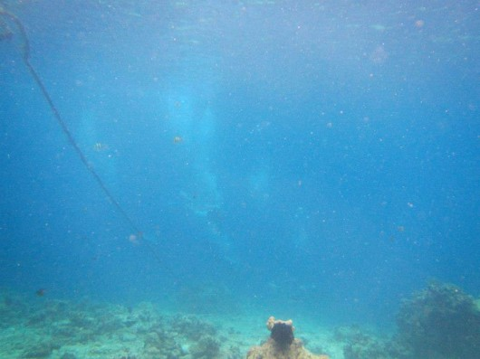 The view during a dive