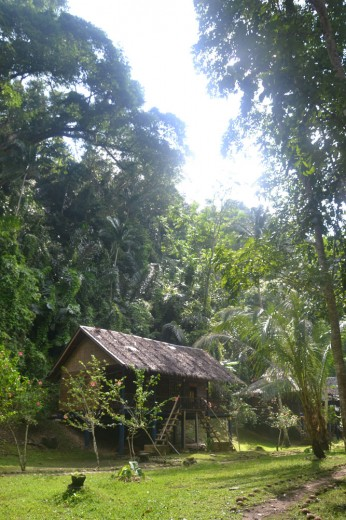 Our lovely accommodation at Nuts Huts in middle of jungle