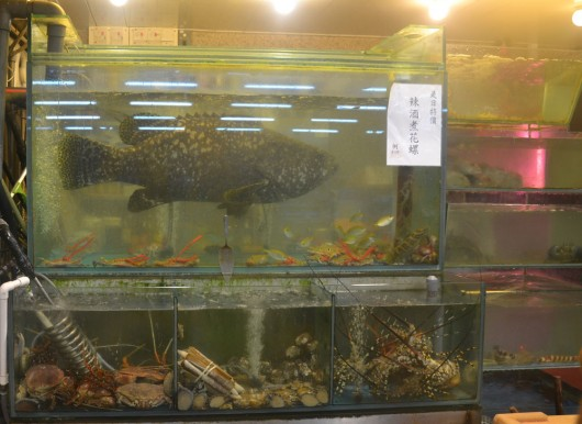 """Huge fish in tiny aquarium. Note probably says """"KILL ME NOW!"""""""