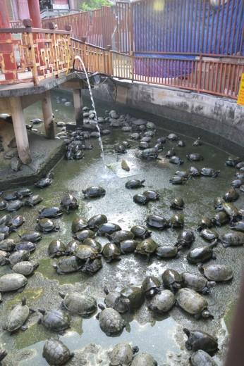 Turtle pond!!